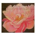 Closeup Pink Rose Needlepoint Canvas