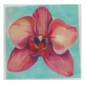 Pink Orchid with Turqouise Background Needlepoint Canvas