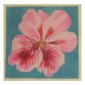 Pink Orchid Needlepoint Canvas